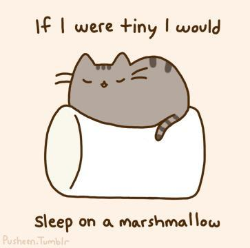 cat, cute, marshmallow, pusheen, tiny