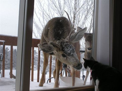 cat, dear, deer, friends, funny, kitten, kitty, laugh, lol, snow, winter