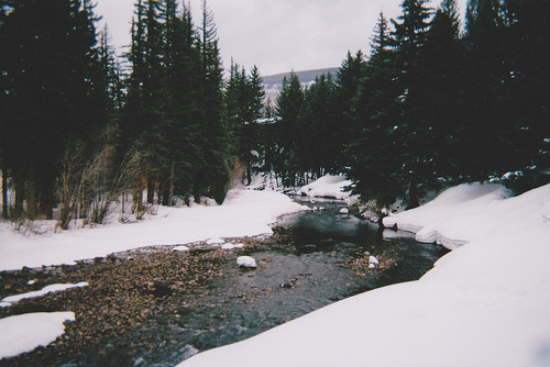 cold, forest, river, snow, trees