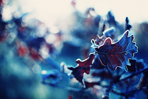 cold, frost, leaf, leaves, photography, winter