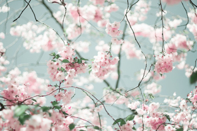 cute, flowers, japan, photography, pretty, sakura