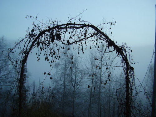 dark, fog, mist, scary, tree