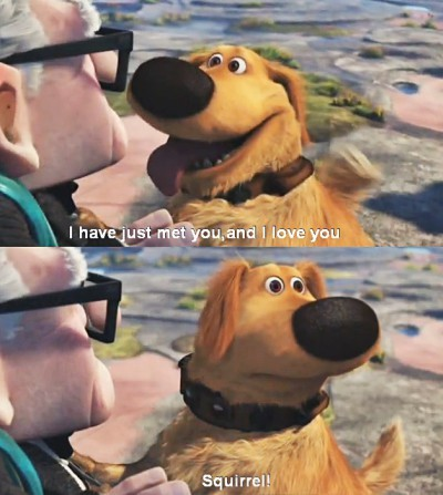 dog, funny, i love you, just met, movie